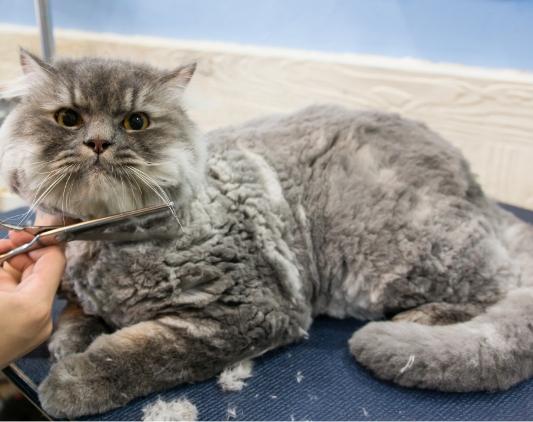 猫専用のグルーマー